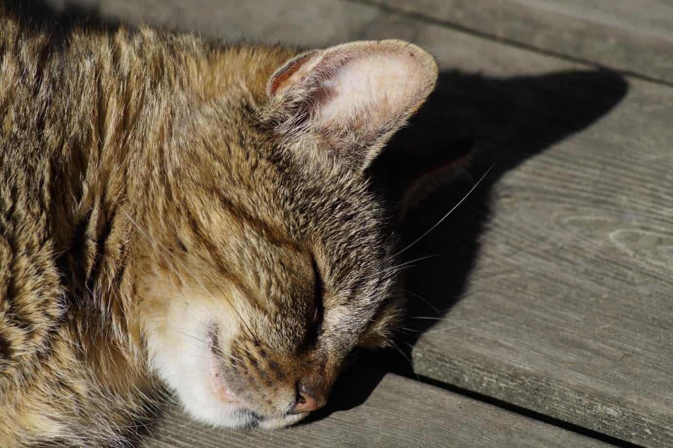 schlafende Katze in der Sonne