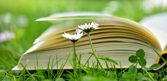 Lesen im Grünen