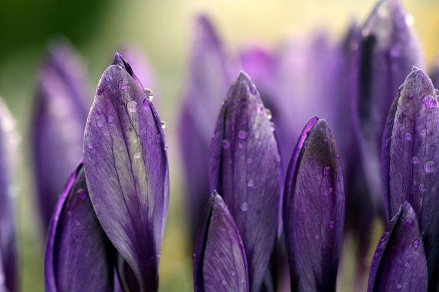 Frühjahrsmüdigkeit beenden und aufblühen