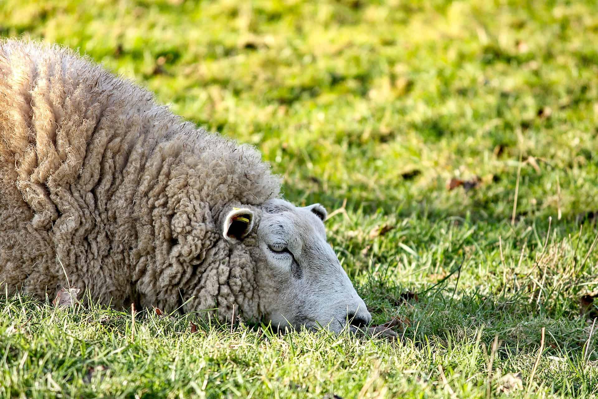 Schlafen hilft bei Frühjahrsmüdigkeit