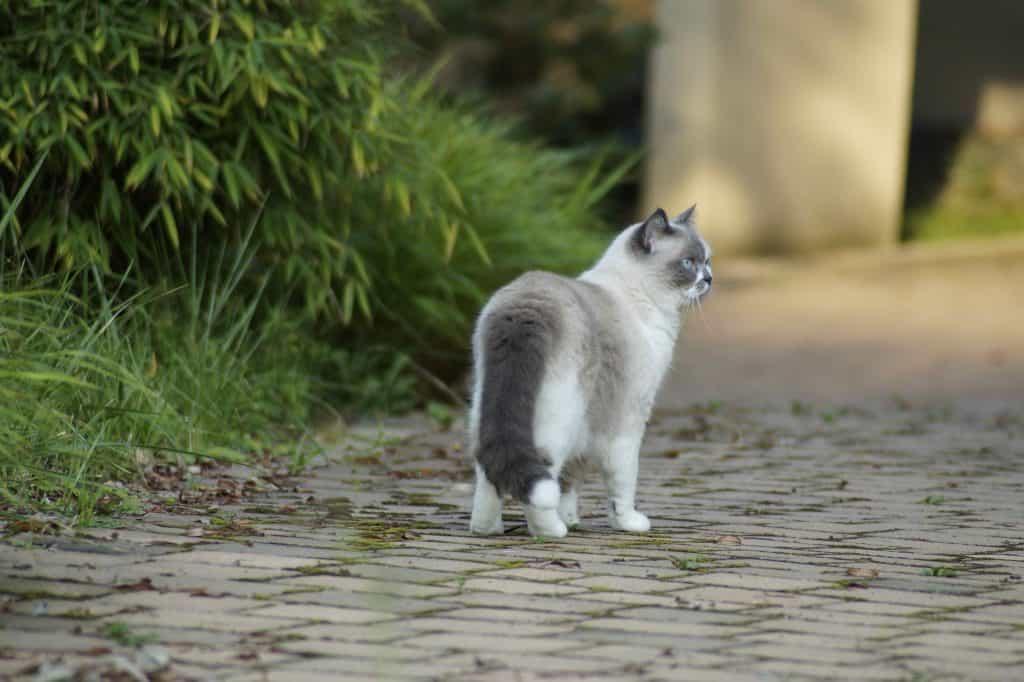 Katzenweisheit: Jeder ist anders