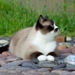 27 Katzenweisheiten oder was Katzen uns über das Leben lehren können