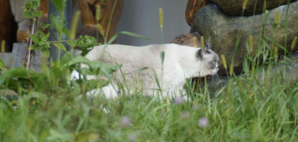 Katzenweisheit: Alles zu seiner Zeit