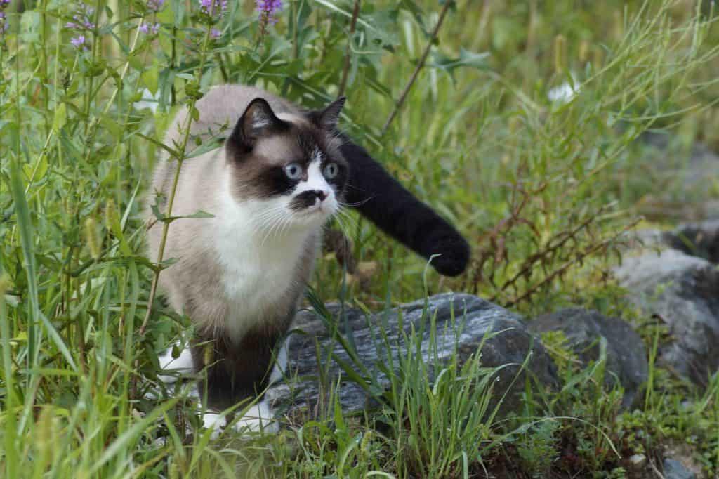 Katzenweisheit: Ich gehe dahin, wo es mir gefällt