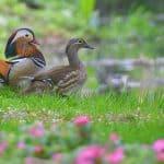 Eigentlich so  offensichtlich – was wir von einer Ente und meinem Neffen lernen können