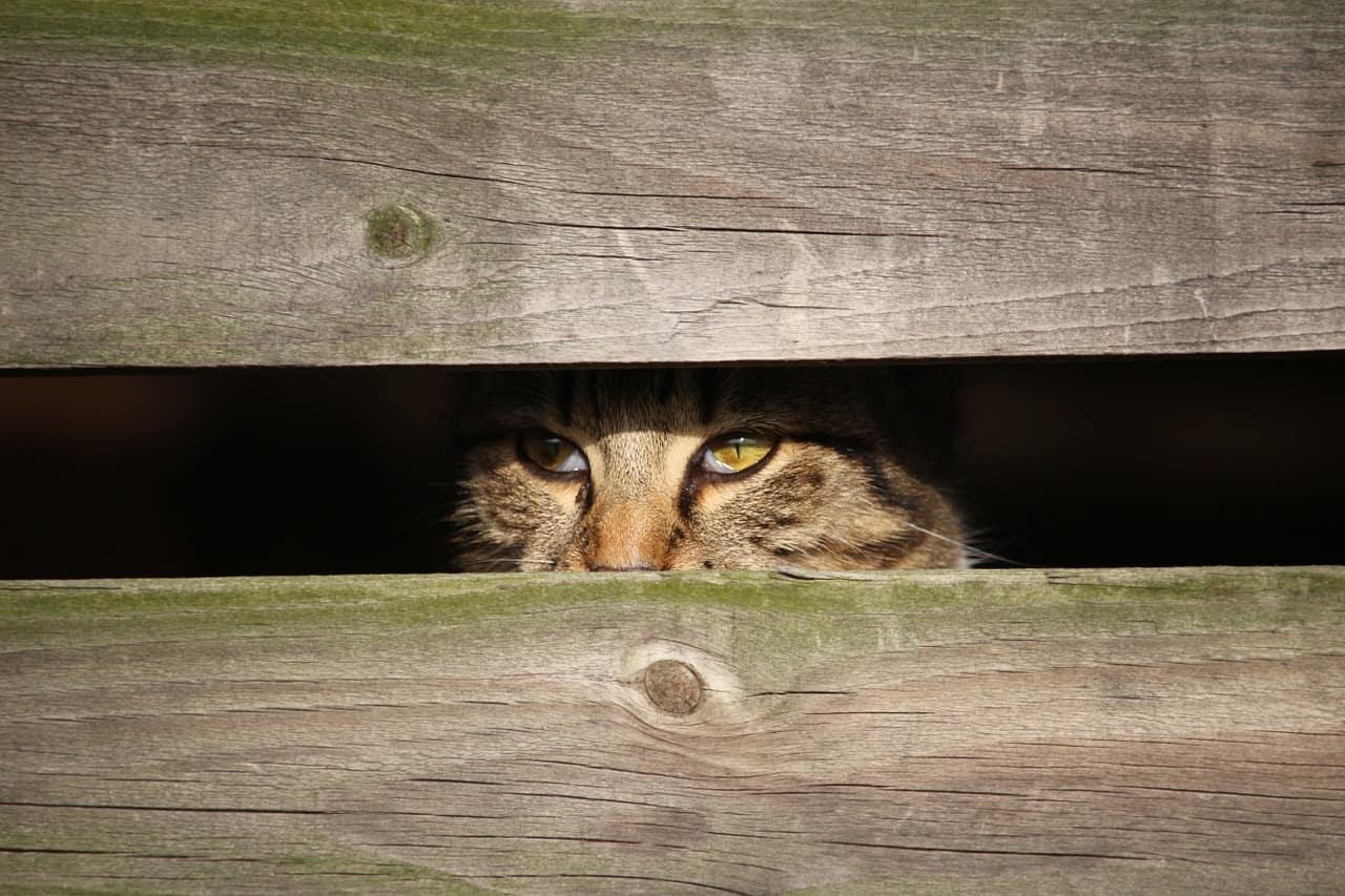 bei Angst verstecken