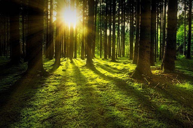 Licht ins Unbewusste bringen